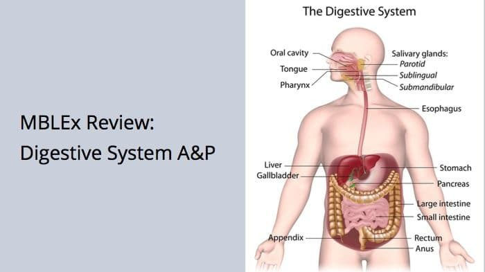 MBLEx review of the digestive system anatomy and physiology