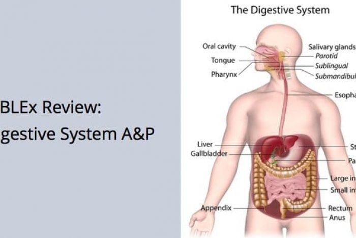 Mblex Review Digestive System Anatomy And Physiology Mblexguide