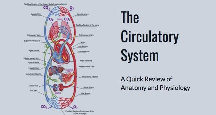 MBLEx Prep: Circulatory System Anatomy and Physiology - MBLExGuide